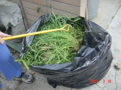 Remove weeds from the ground to the waste bag all in one opeartion!  Click to see larger image!
