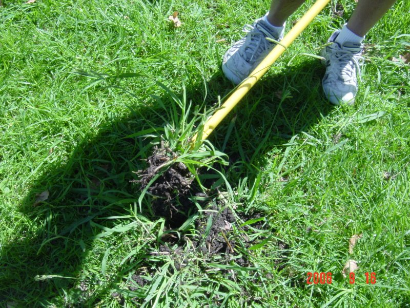 Image Result For Best Way To Fertilize Lawn